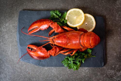 Gotowany homar kanadyjski