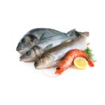 Ryby dzikie